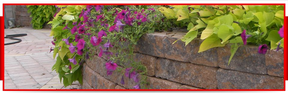 Flowers / stone wall